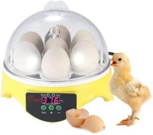 incubadora de huevos chidi toy